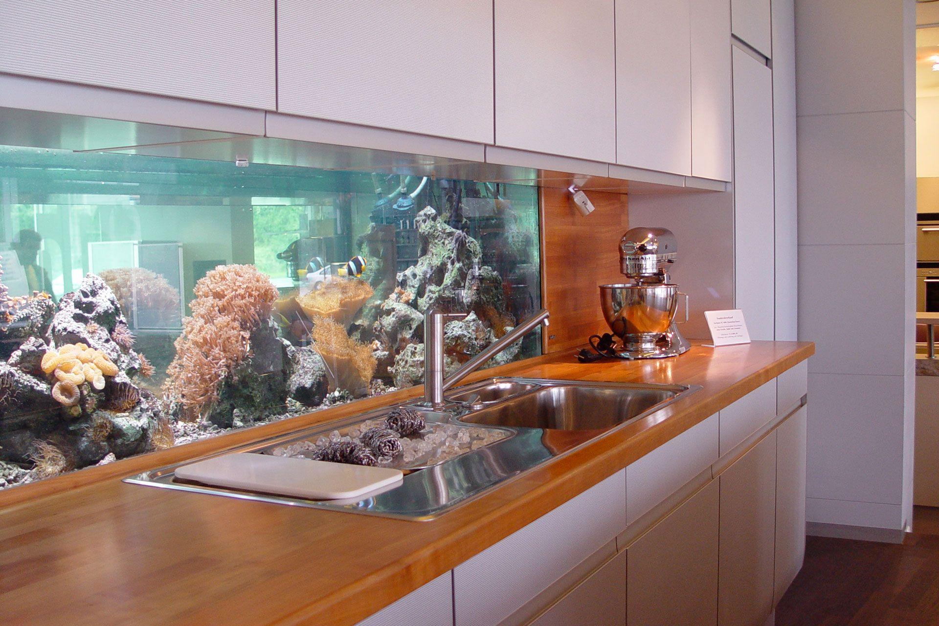 Piranha Aquarium Gebaut Von Aquarium West GmbH #AquariumWest  Premium Aquariumbau Www.aquariumwest.de #Meerwasseraquariumpodcast #  MarkusMahl #aqu2026