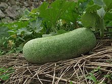 Winter melon, also called ash gourd. Common in east and south-east Asian cooking. #wintermelon