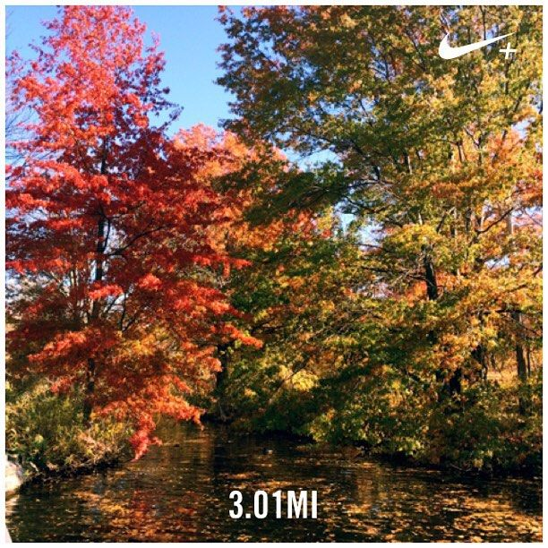 Quick morning run and November heatwave  #garmin #nikeplus #CambridgeMA #fall #CambMA #phdrunner #pegasus #poweredbyplants #plantbased #instarunners #vegan #veganrunner #fitfam #foliage #instamood #runmycity by yaseminkg November 05 2015 at 06:26AM