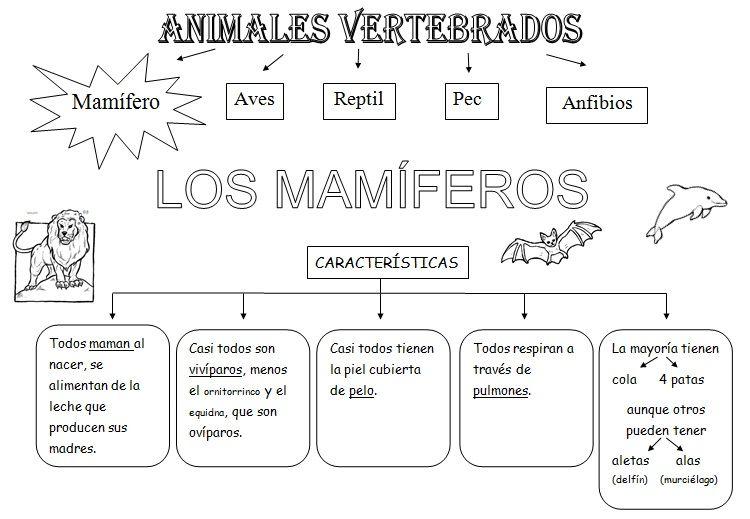 MIS COSAS DE MAESTRA*: Animales Vertebrados: Esquemas | Tema ...