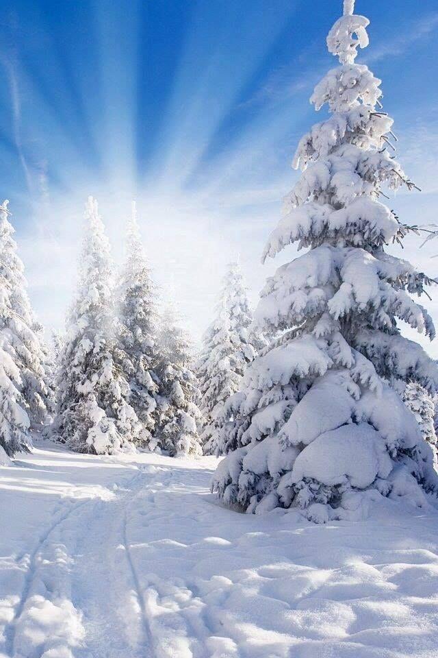winterbilderschneeflocken  winterbilder