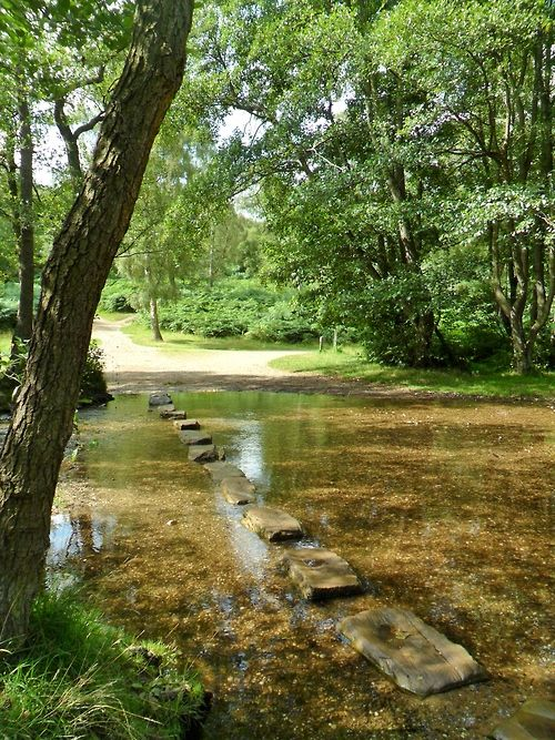 Stepping Stones In Cannock Chase Staffordshire England Places To Go Cannock Wonderful Places