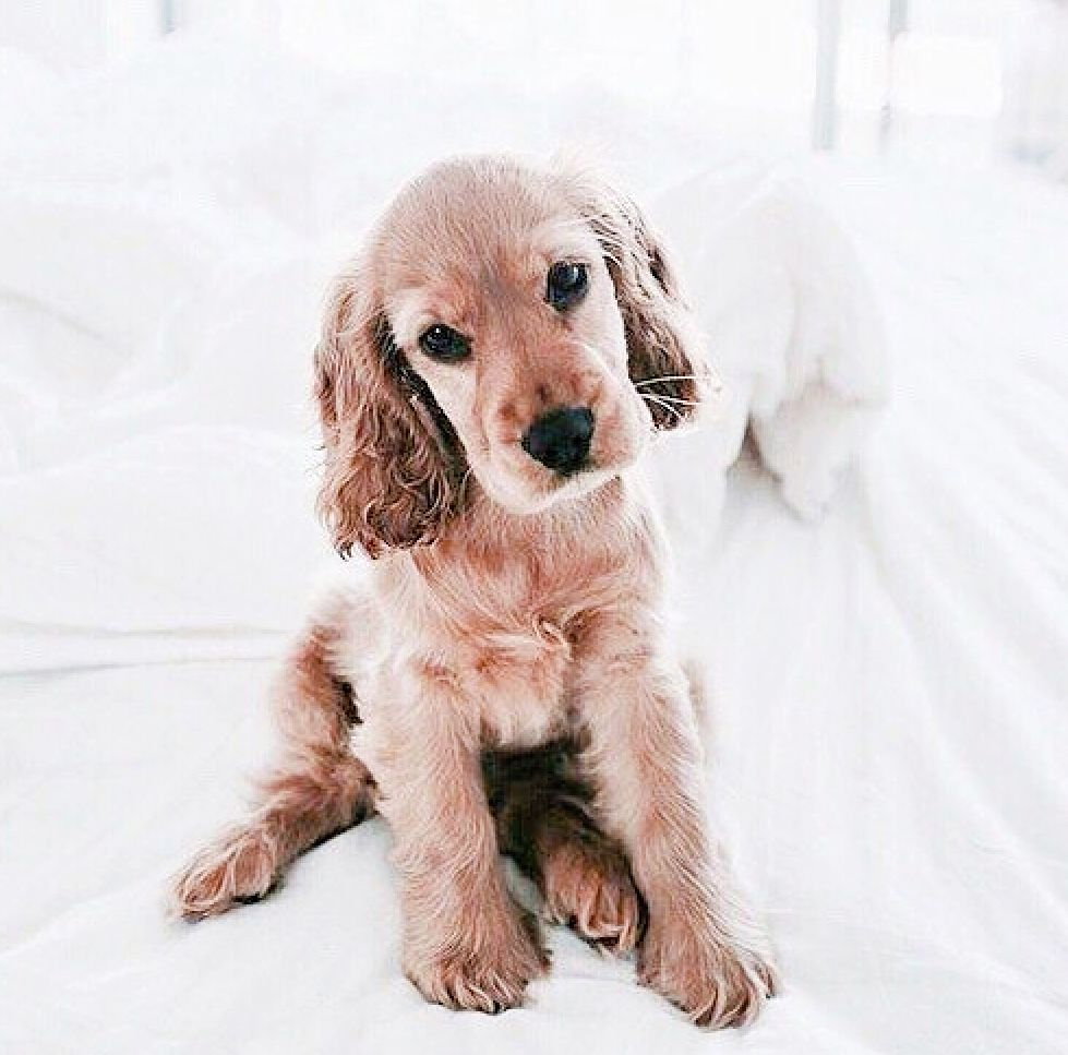 Pin By Kiki Manou On Xxxxxxxxxxxxxx Animals Puppies Dogs And Puppies