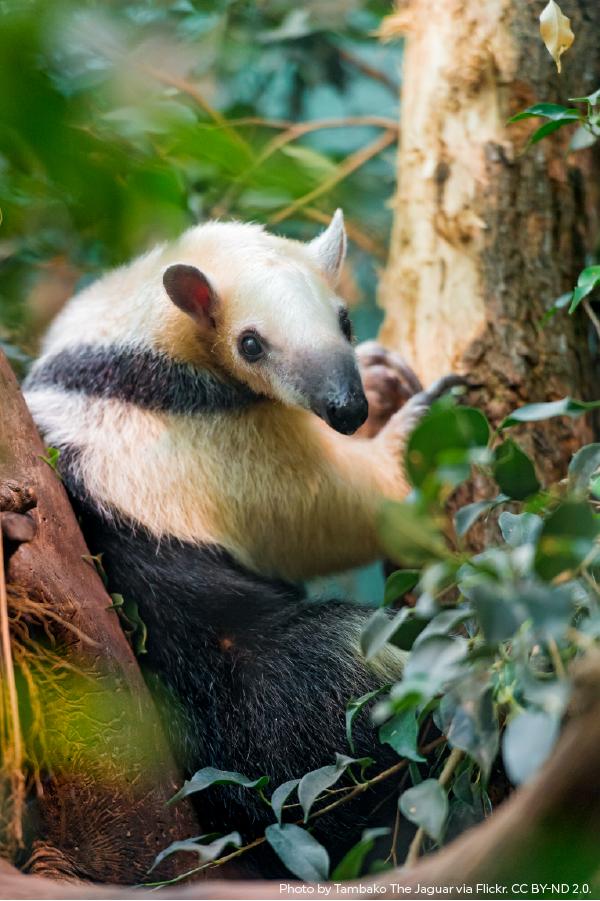 Saving Indigenous Lands In The Amazon Weird Animals Animals