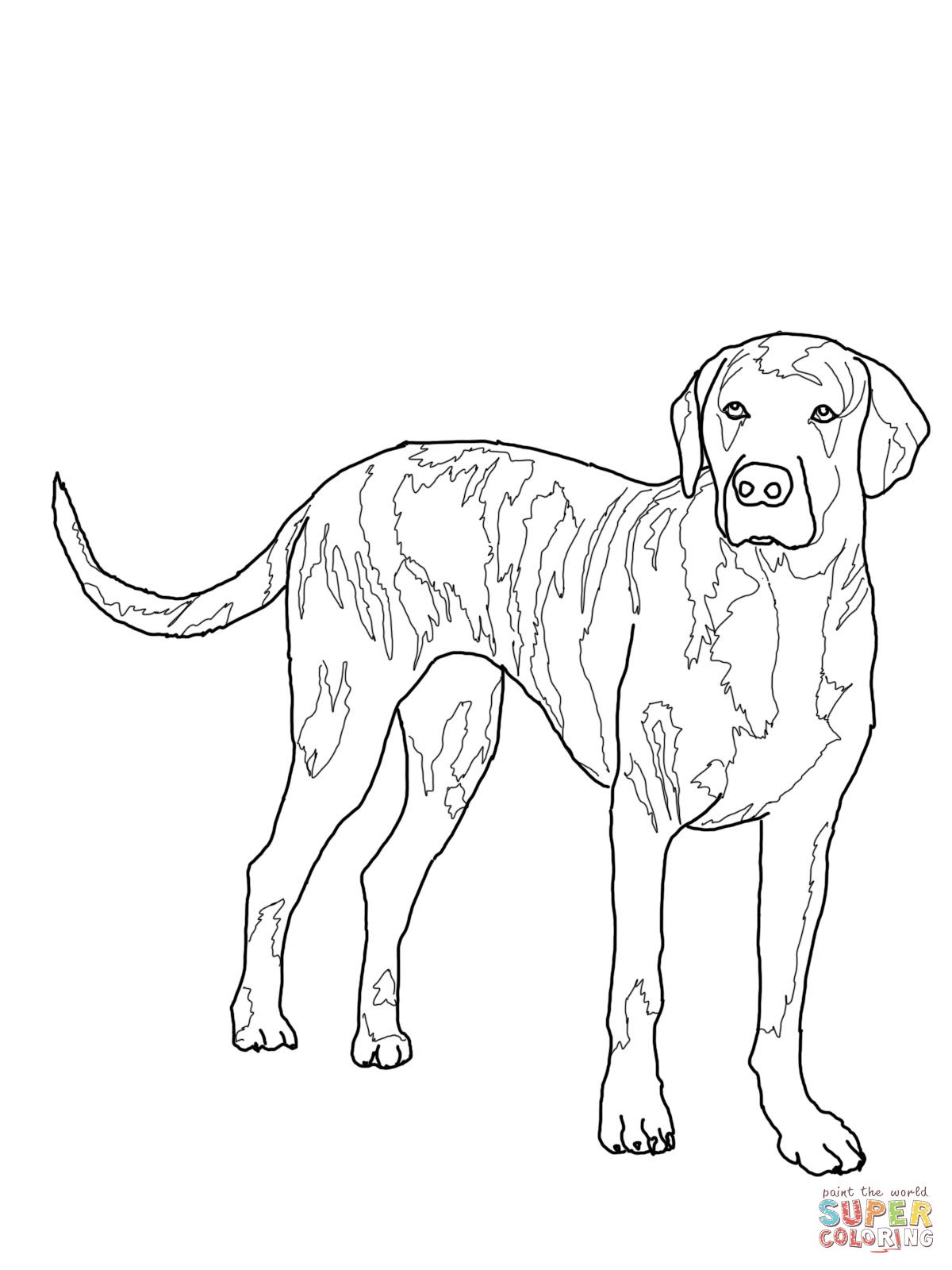Plott Hound Outline Plott Hound American Foxhound Beagle Colors