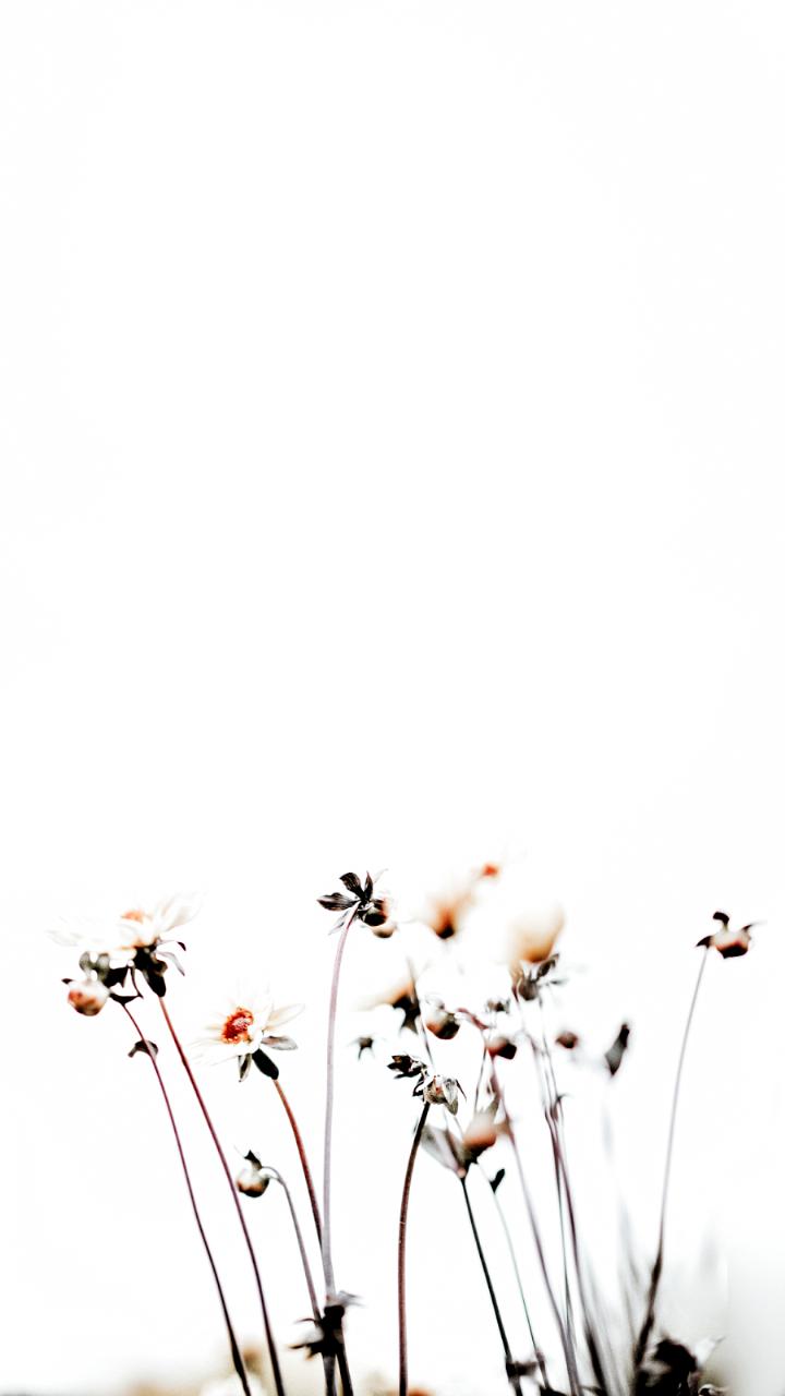 Leaving Facebook In 2020 Pink Wallpaper Iphone Minimalist Wallpaper Flower Wallpaper