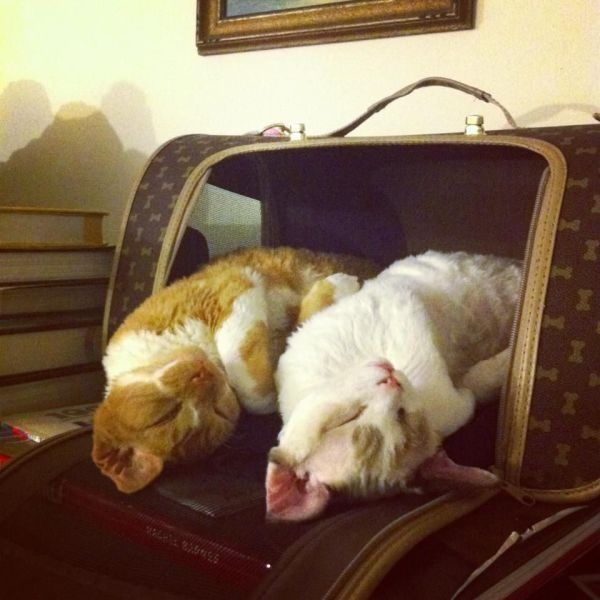 Synchronized napping...