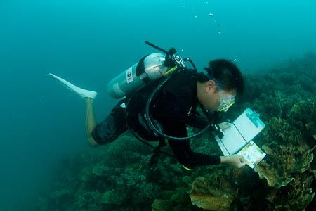 marine biologist?! My Dreams Pinterest Marines, Marine biology - marine biologist job description