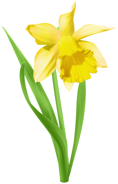 Daffodil Transparent Png Clip Art Image Watercolor Flowers Paintings Daffodils Flower Art