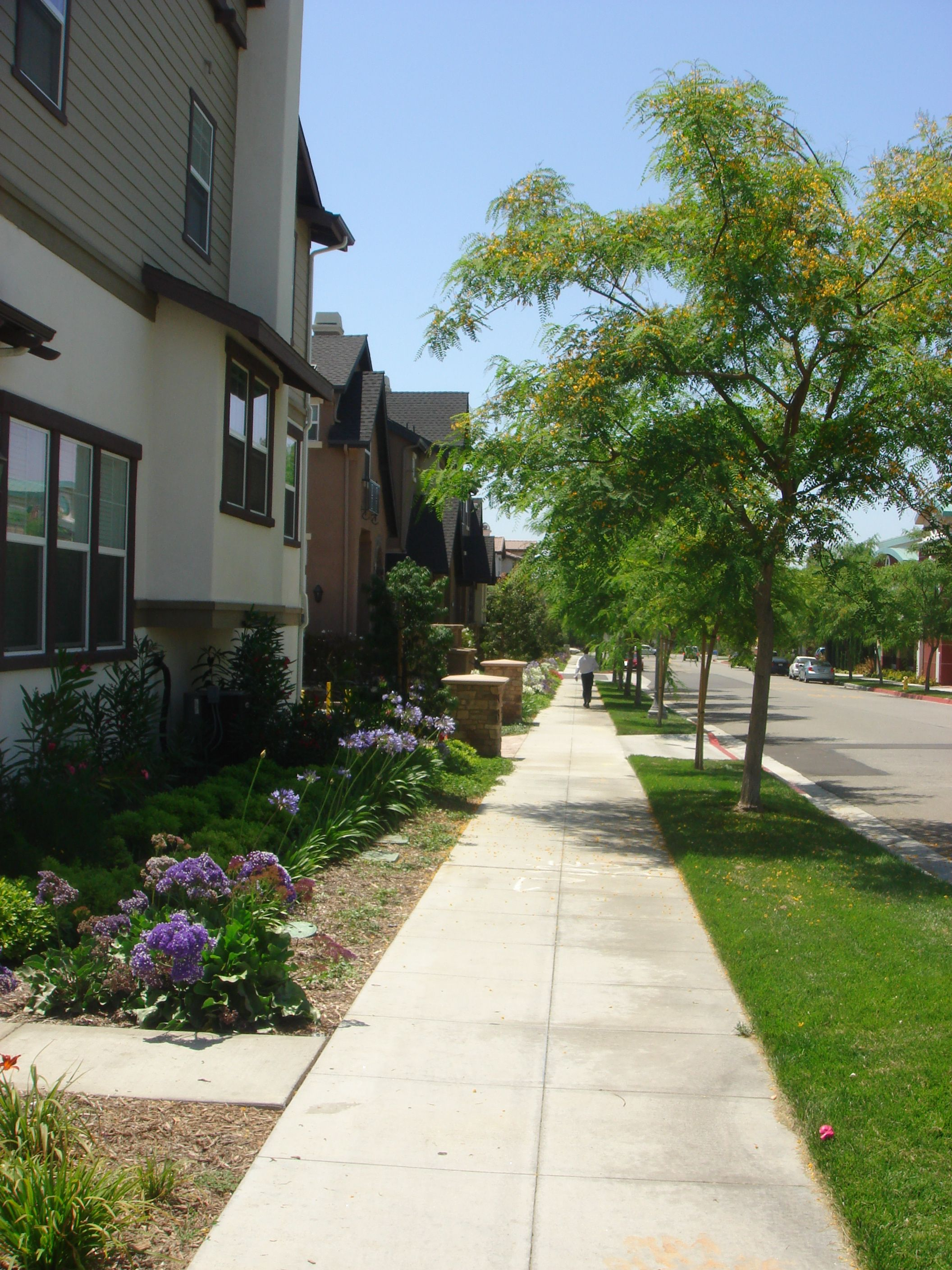 Streetscape To The North Of Hickory Click To Close: Streetscape Planting