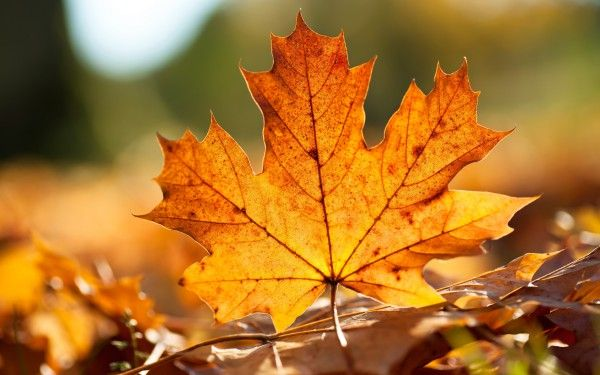Hd Wallpapers Wallpapers Download High Resolution Wallpapers Hd Wallpapers Wallpapers Download High Resolution Wallpapers Consists Of Nature Wallpapers Autumn Leaves Wallpaper Fall Wallpaper Leaves Autumn leaves wallpaper hd