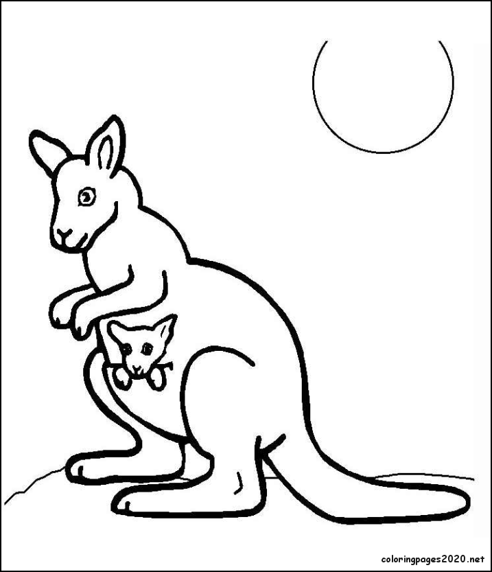 Kangaroo Coloring Page Download Trend
