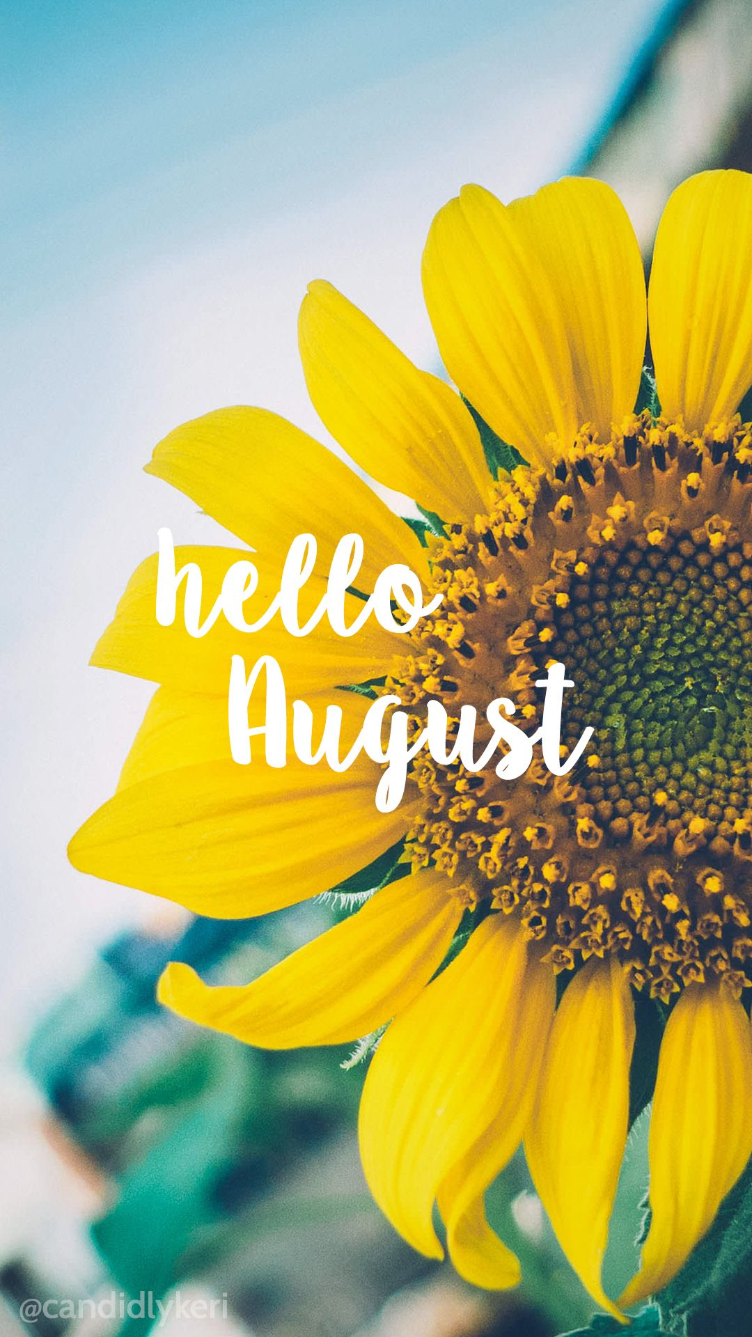 Hello August Sunflower bright happy background August  2016  wallpaper you can download for free on the blog! For any device; mobile, desktop, iphone, android!