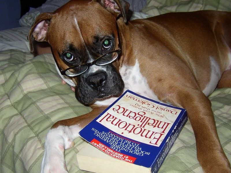 Kobe loves to catch up on reading Dog love, Dogs, Pets