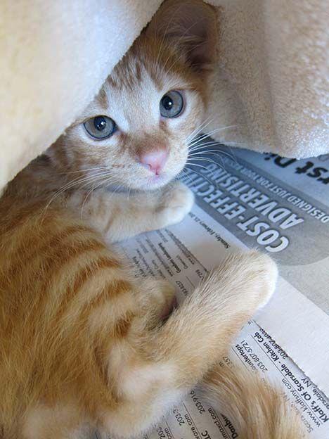Sundays At The Shelter Cat Shelter Cat Love Kittens