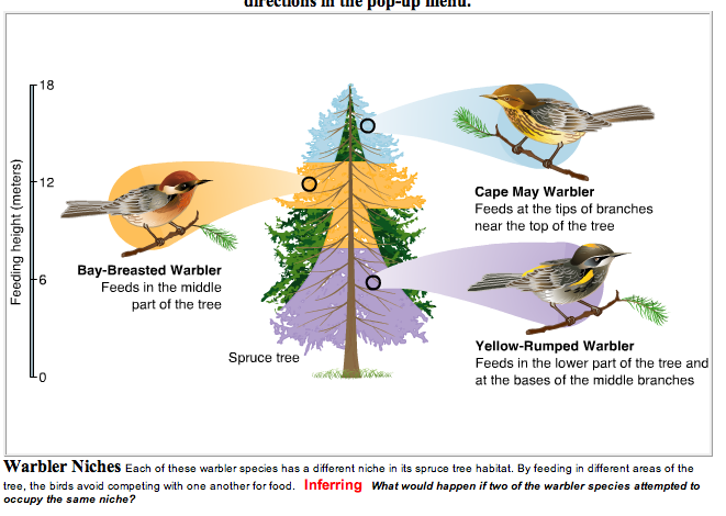 Examples Of Niches In Ecology Google Search Classroom Ideas