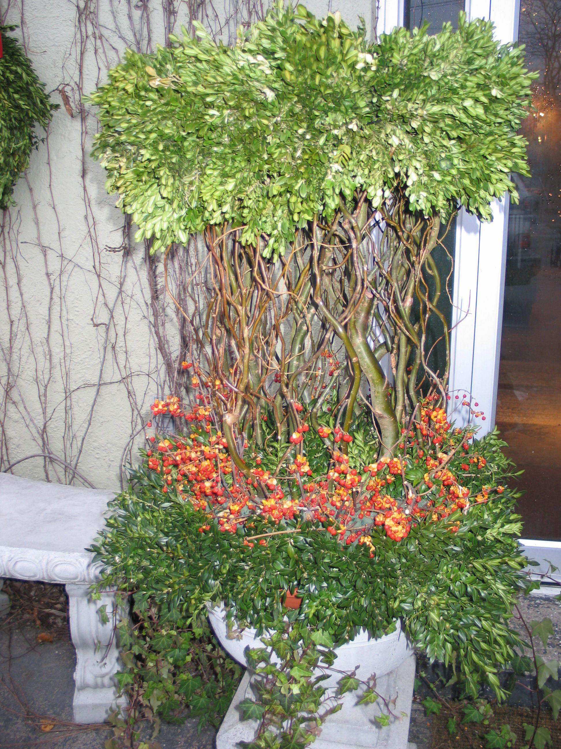 Forget Me Not Flowers, Oakville, Frank Rea, Christmas, Inspiration ...