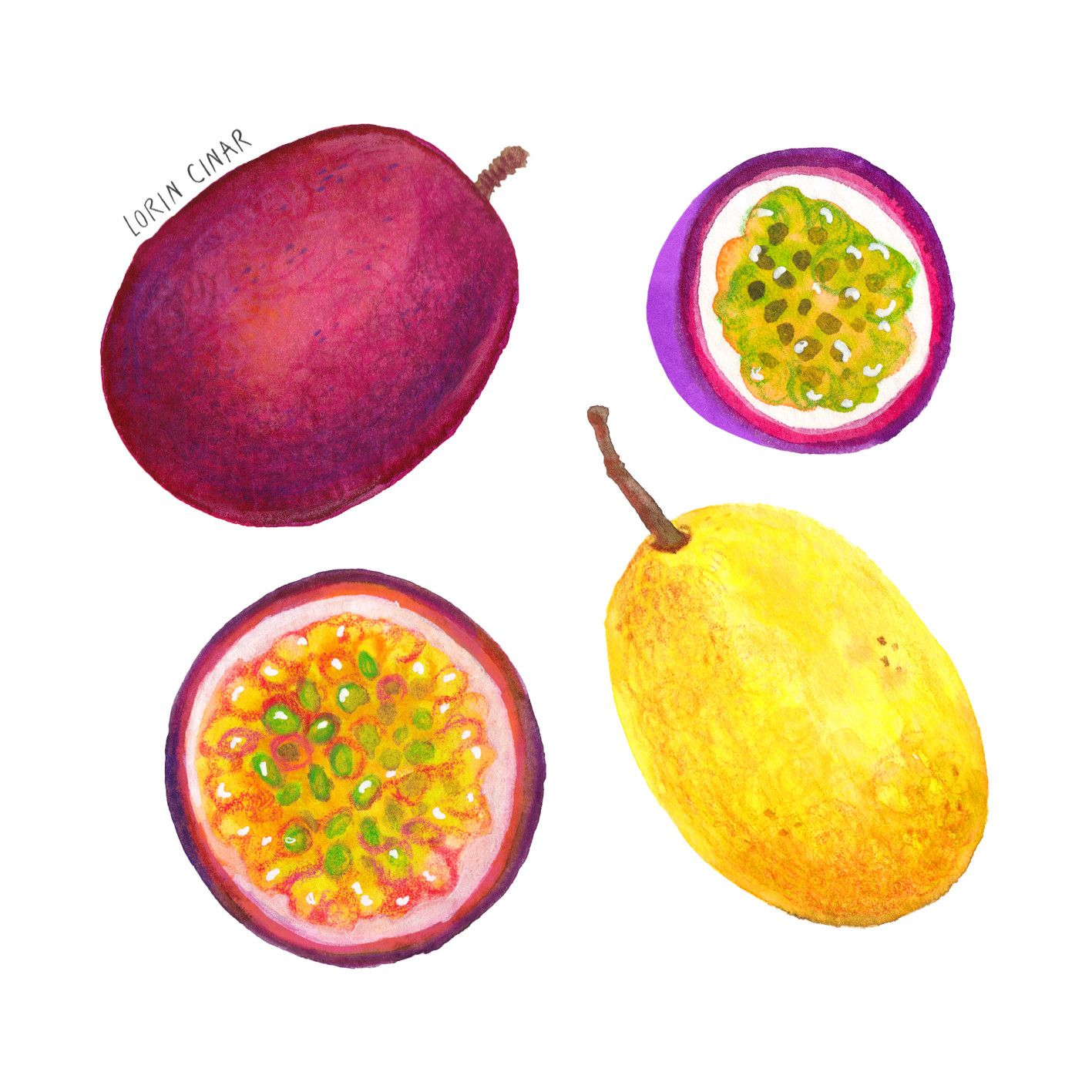 Passion Fruit By Lorin Cinar Food Illustrations Fruit Passion Fruit