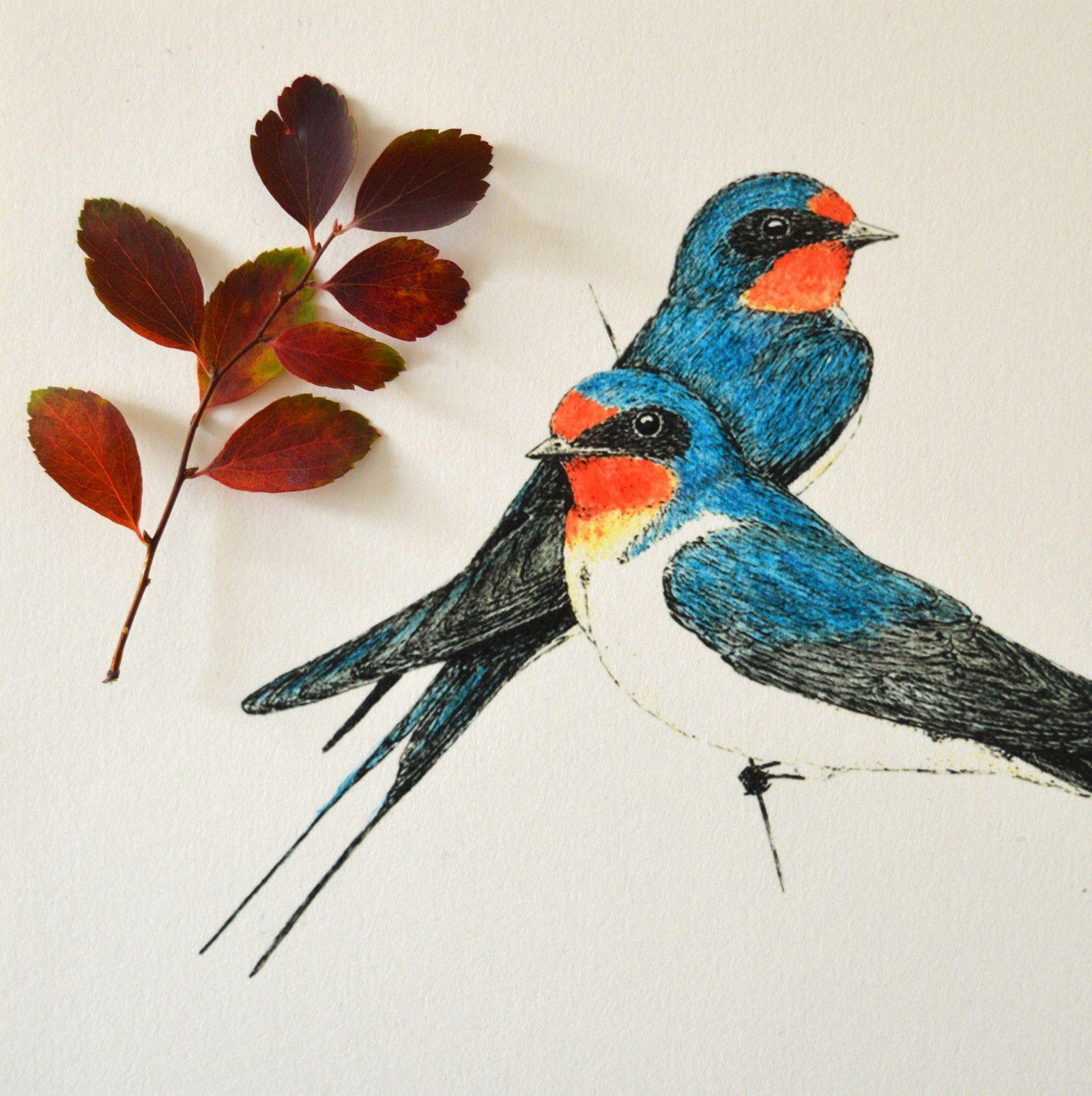 Vlastovky V Barvach Reprodukce Autorske Kresby Tusi A Akvarelovymi