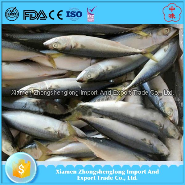 Hot Sale of Chinese Canned Frozen Pacific Mackerel Fish.