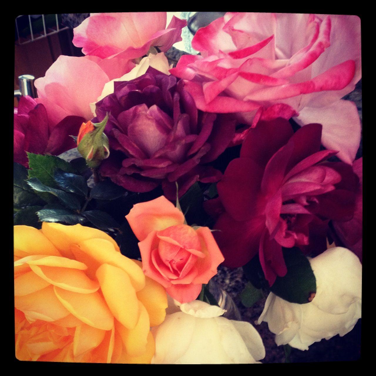 My garden roses Rose, Flowers, Garden