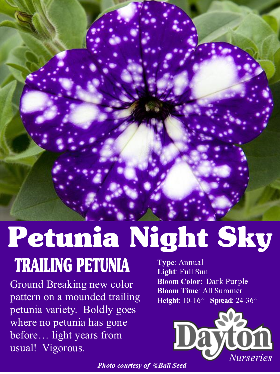 Petunia Night Sky Ground Breaking New Color Pattern On A Mounded Trailing Variety Boldly Goes Where No Has Gone Before Light Years