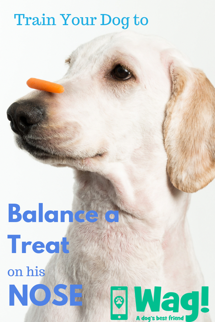 3 Simple Dog Training Tips That Will Change Your Dogs In No Time Training Your Dog Dog Training Puppy Training