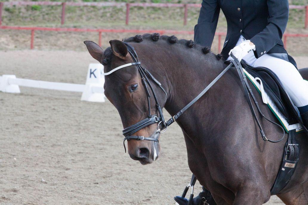 Darlinghorse