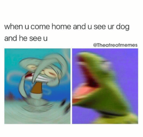28 Hilarious Dog Memes For 2018