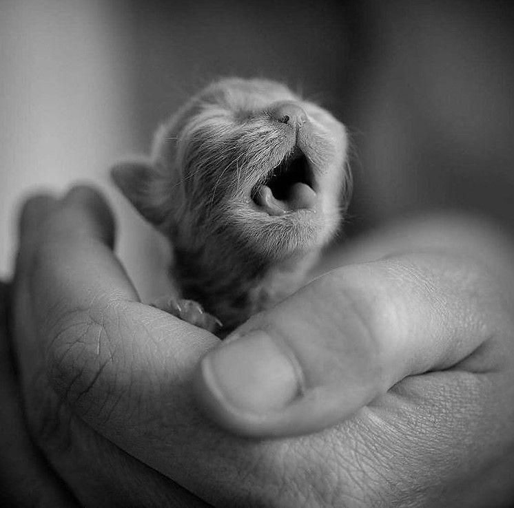 Kitty Baby | Baby Cat | New Born Kitten | Kittens | Cutest Kitten | Cute Kitten Photo | Adorable Kitten | Kitten Pics | Kitten Images | Cutest Pets | Cute Animals  #babycats #kittens #kittenlovers #kittenpictures #kittenimages #cutepets #petpictures #cuteanimals If you love cats as much as we do, check out our animal canvas wrap range, click that link!Check out our canvas art, prints & apparel in store, and on this link there is a FREE T-SHIRT GIVEAWAY!  Limited Edition Tees Not Found In Stores!