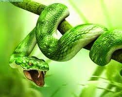 Esoterismo E Interpretacion De Sueños Qué Significa Soñar Con Serpientes Serpientes Reptiles Y Anfibios Felinos Salvajes