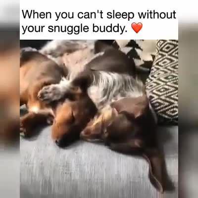 Funny Dachshund Dogs|Funny Dachshund|Funny Dachshunds|Funny Dogs|Funny Sausage d…