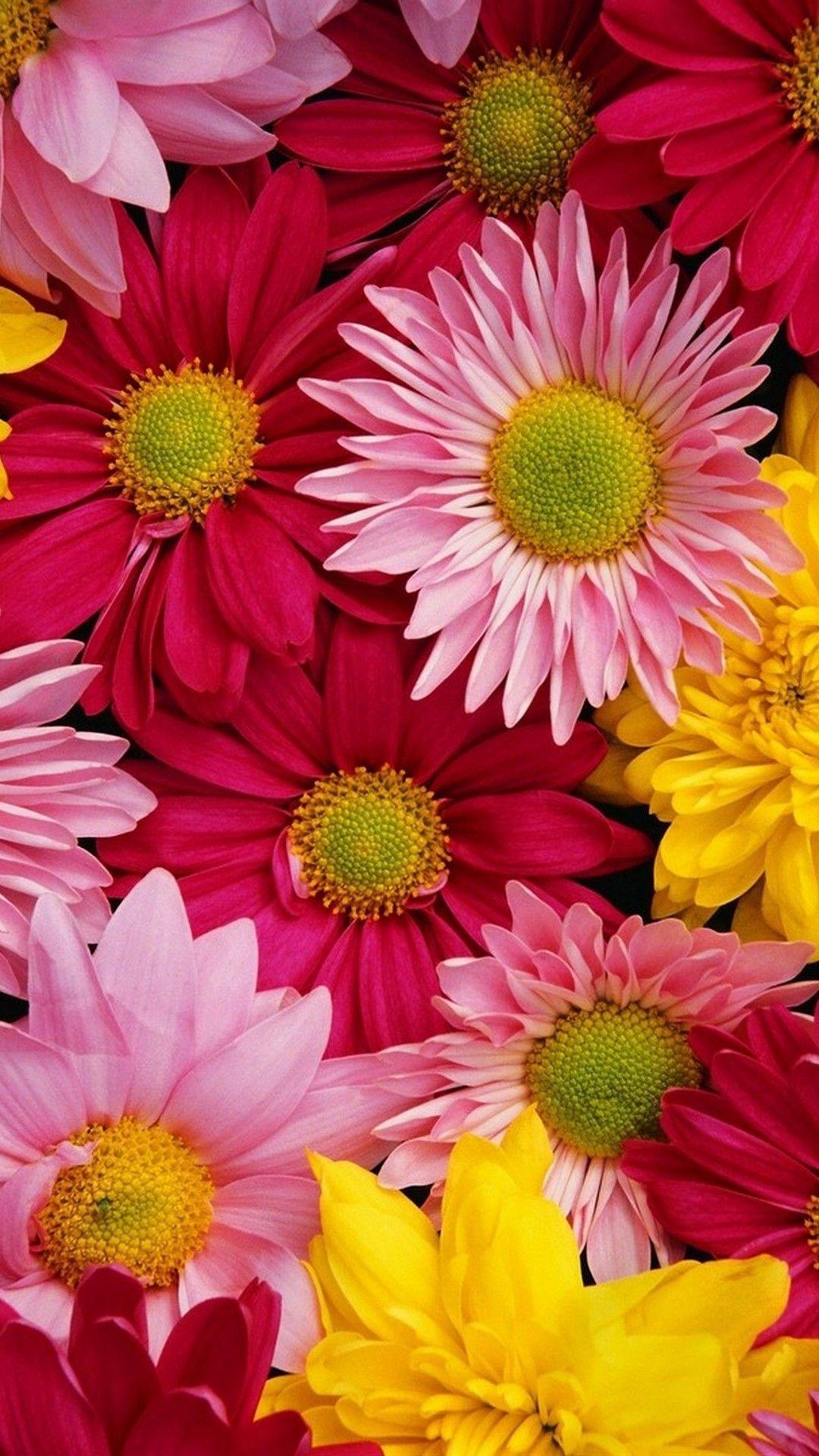 Floral Wallpaper Iphone Pixelstalk Net In 2020 Flower Iphone Wallpaper Wallpaper Nature Flowers Hd Flower Wallpaper