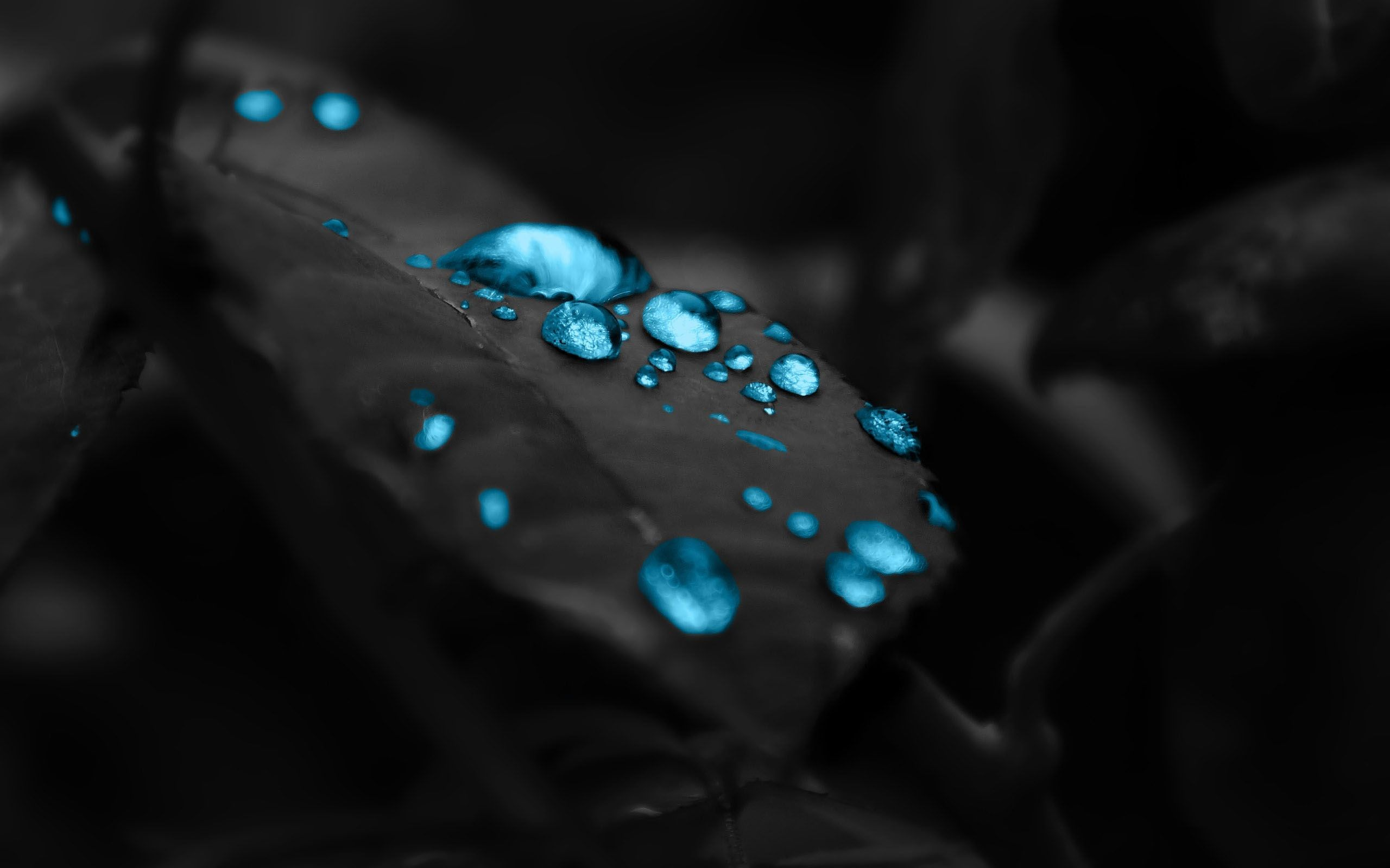 The Leaves Dew Mac Hd Wallpaper Dazzling Wallpaper Blue Water Wallpaper Dark Blue Wallpaper Blue Wallpapers