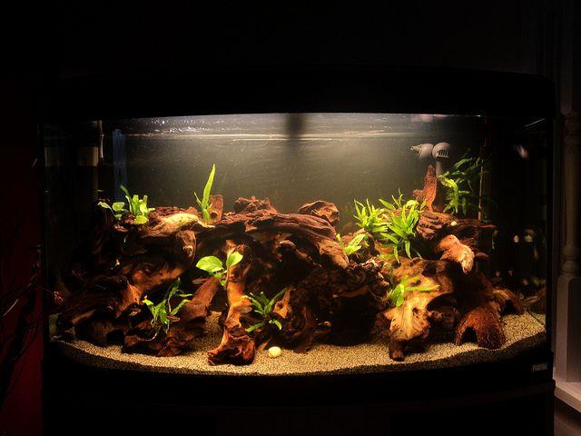 Mopani driftwood bowfront aquarium legit aquarium for Driftwood for fish tank
