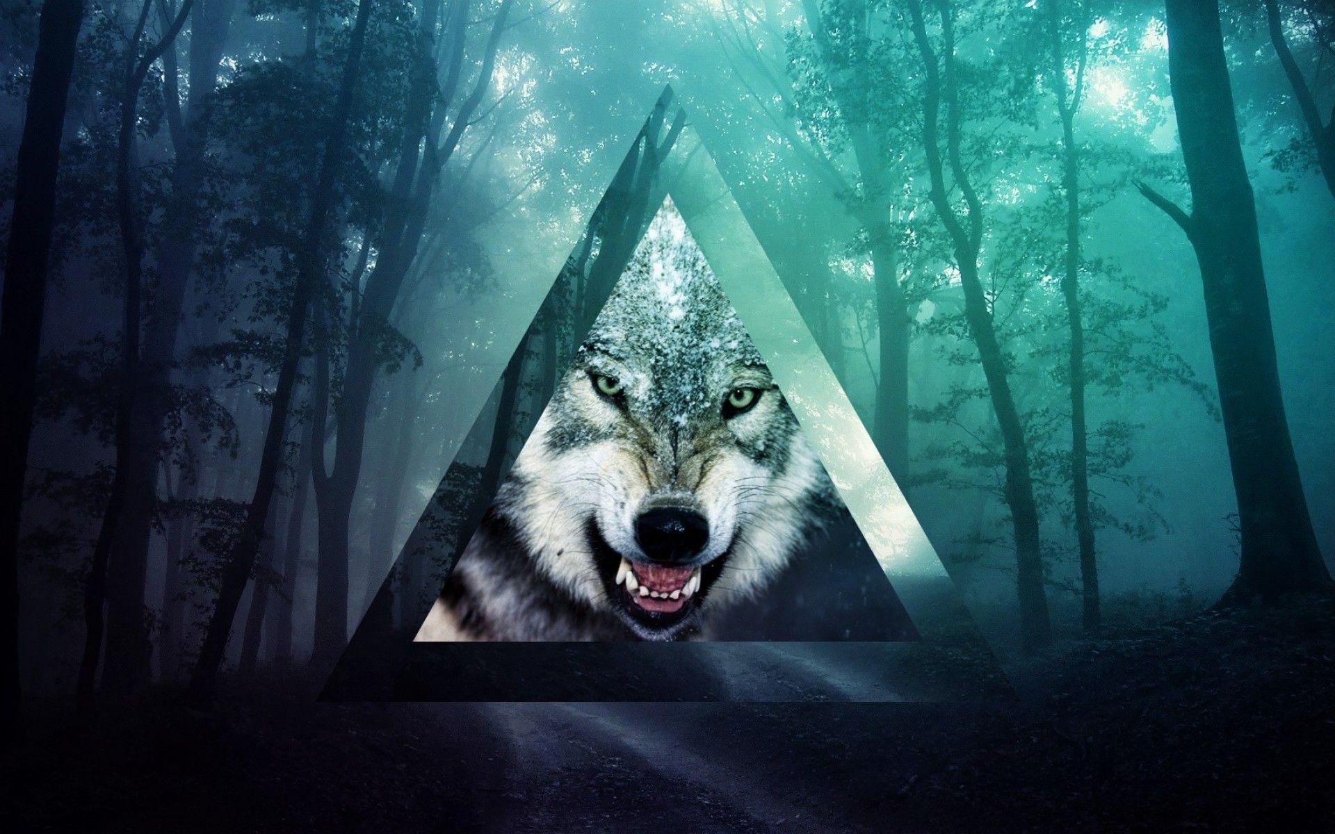 Tumblr Wolf WallPaper HD wolf