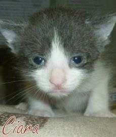 Saint Frances Animal Center Is Located In Georgetown Sc We Are