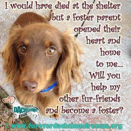 Pin By Uber Wagmore On Rescued Adopted My Favorite Kind The Fosters Foster Dog Animal Advocacy