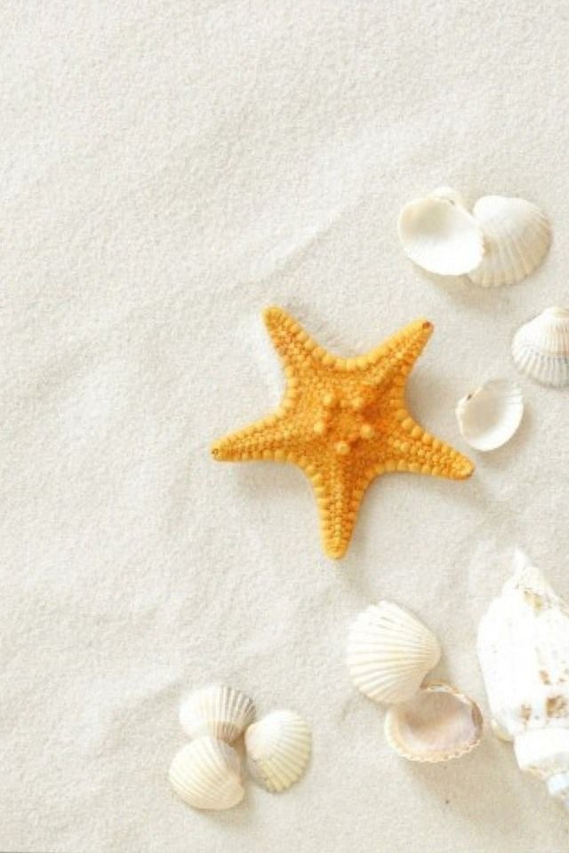 starfish & shell