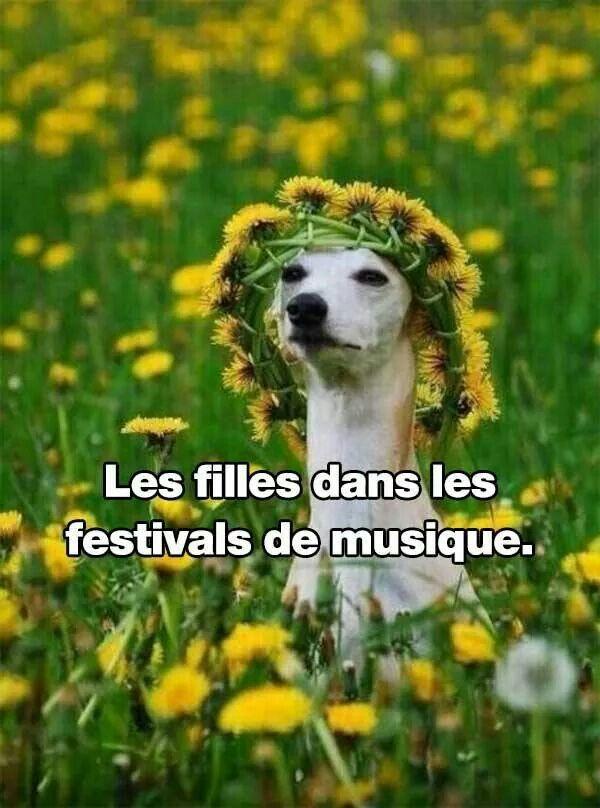 Les filles dans les festivals de musique.  HAHAHAHHA this is too much