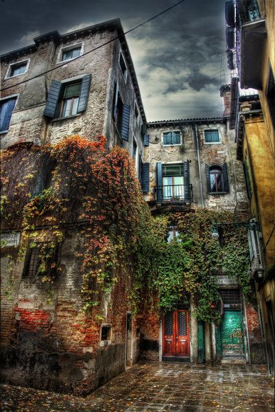 Ivy and Gold HDR by ISIK5 (print image)