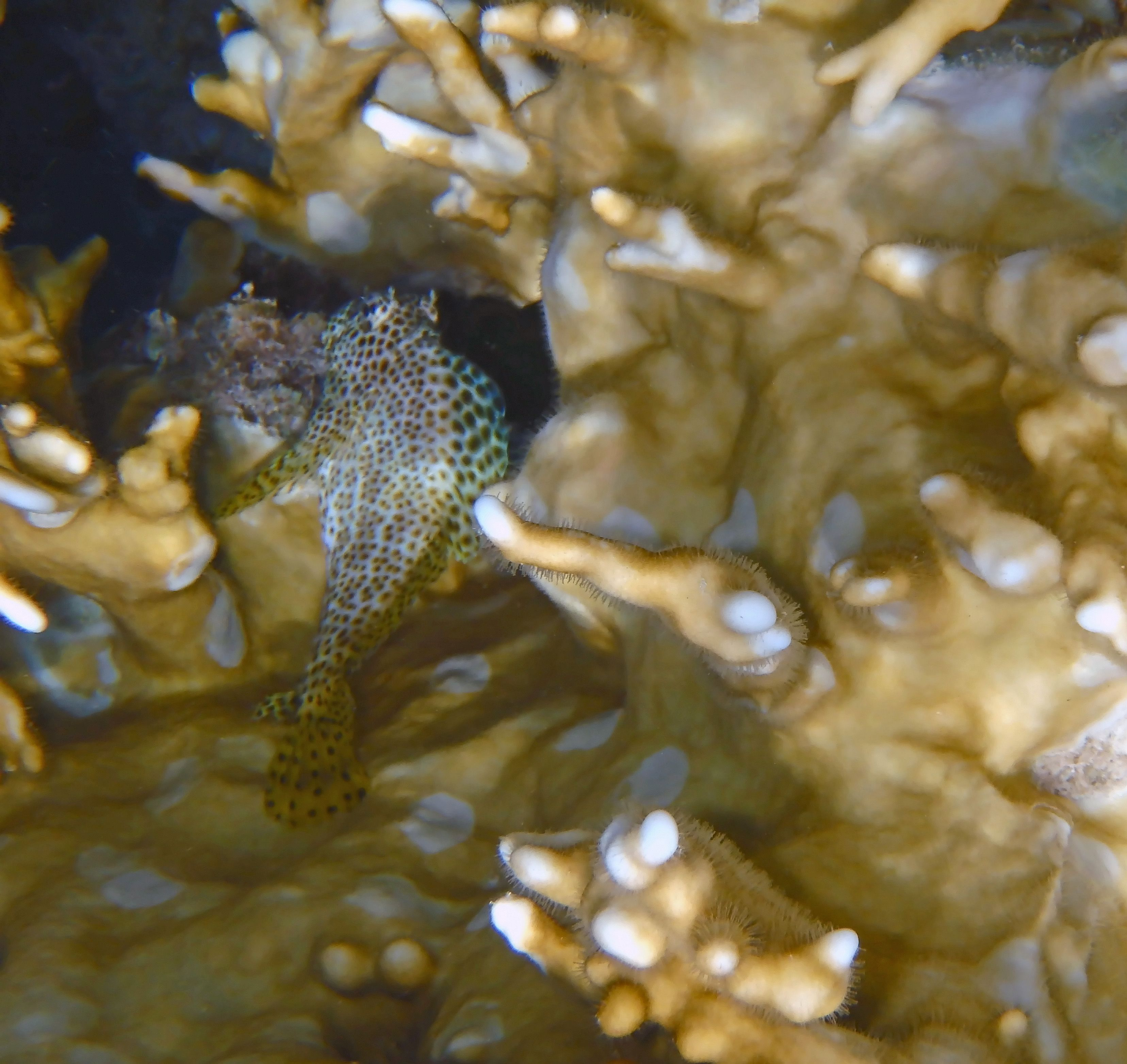 Baby among the corals