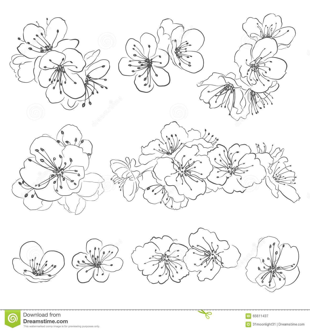Ensemble de fleurs de cerisier de dessin t l charger - Dessin fleur de cerisier ...