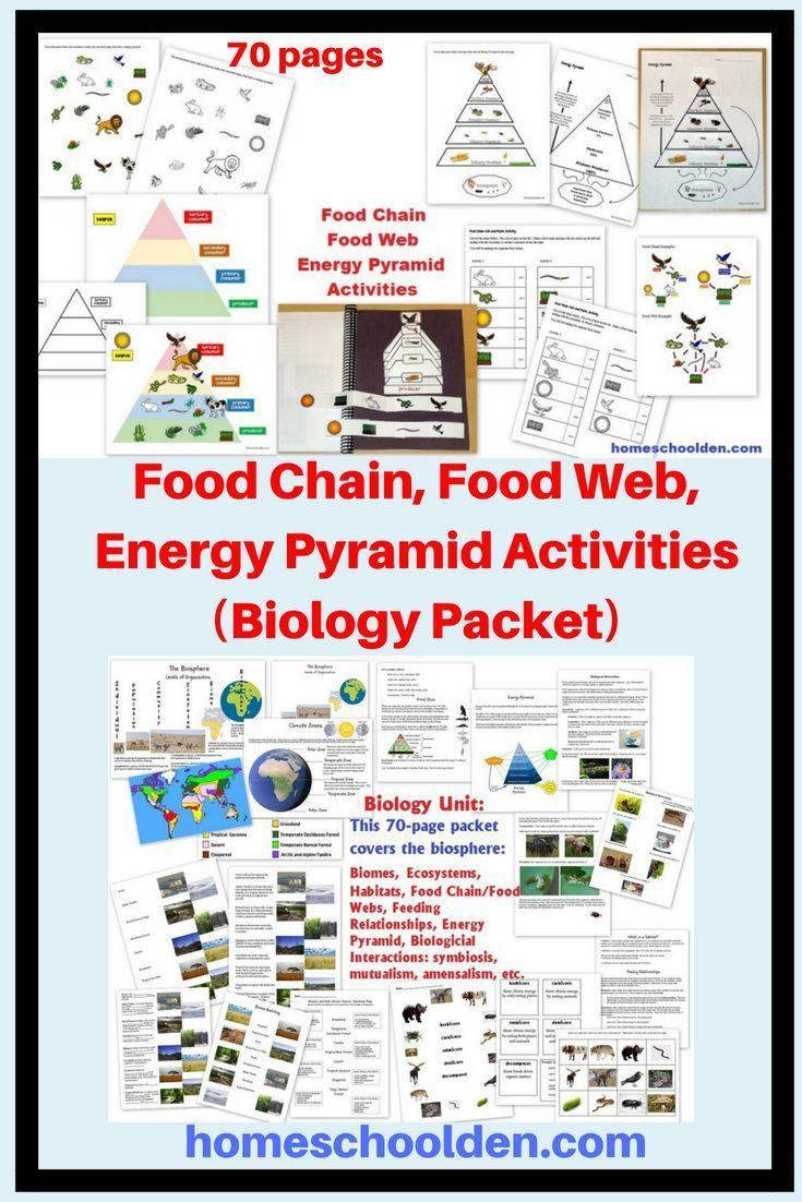 Food Chain, Food Web, Energy Pyramid Activities (Biology