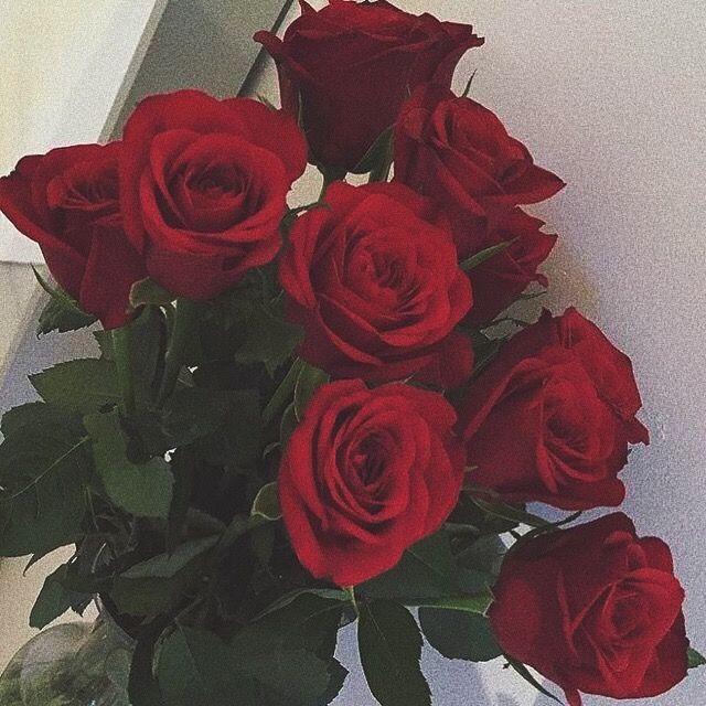 Raegencallihan Flower Aesthetic Flowers Red Roses