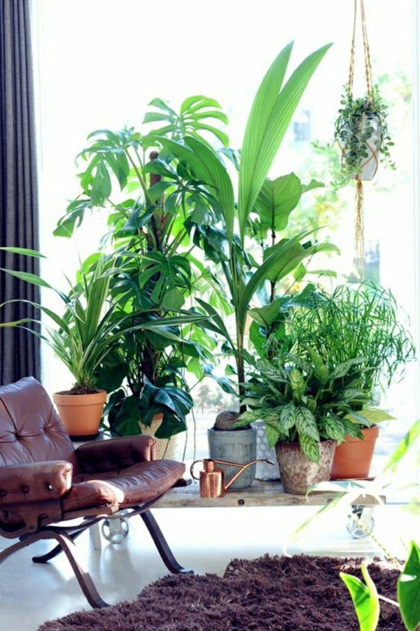 pinanna goodale on house  home  feng shui plants
