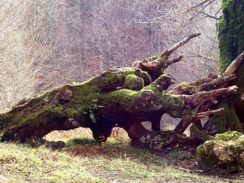 Tree, Dead, Wood, Moss, Fallen, Log, Decay, Decayed Photo