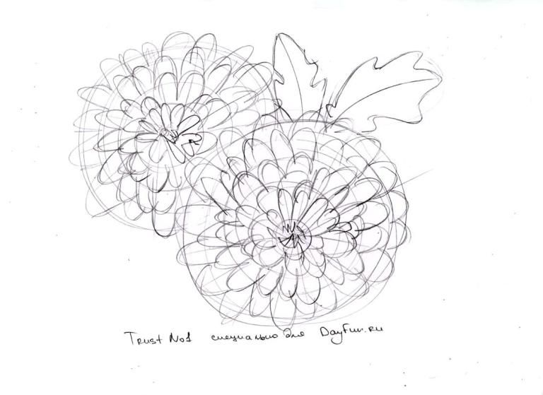 How To Draw Chrysanthemums Step By Step 5 Flower Drawing Tutorials Chrysanthemum Drawing Flower Drawing