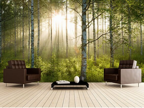 pas cher personnalis paysage naturel fond d 39 cran for t de bouleaux lumi re du soleil 3d. Black Bedroom Furniture Sets. Home Design Ideas