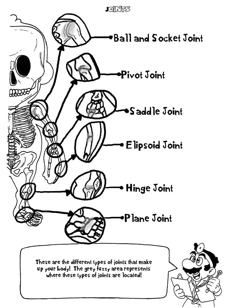Mario - Joints | Anatomy coloring book, Coloring pages ...